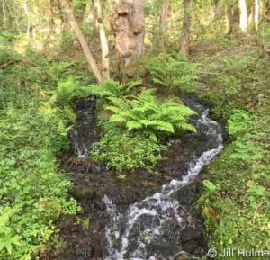 Stream in Froggatt Wood © Jill Hulme